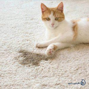 آموزش پاک کردن فضولات حیوانات خانگی از فرش