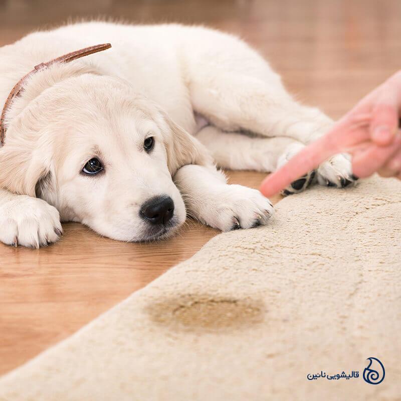 روش پاک کردن ادرار حیوانات خانگی از فرش